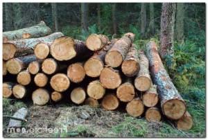 Бревна деревянные