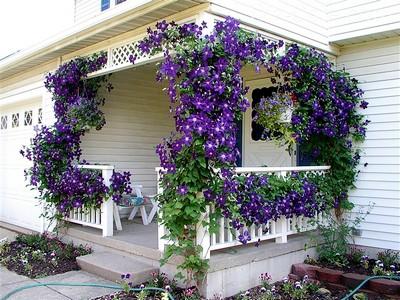 Лучшее затенение и украшение — цветы